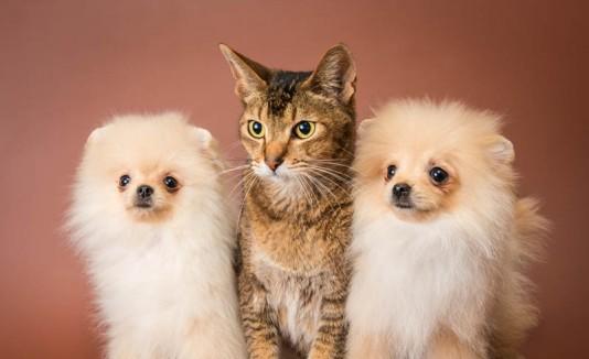 Dos perros y un gato