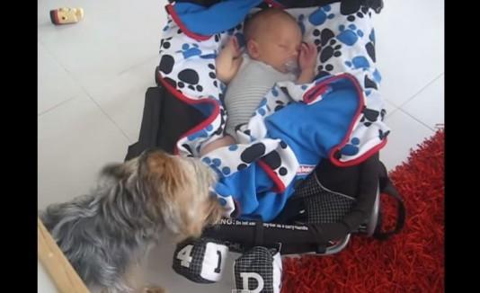 Perro arropando a un bebé