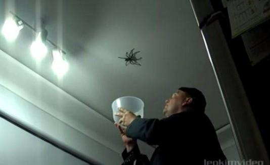 Hombre atrapando una araña