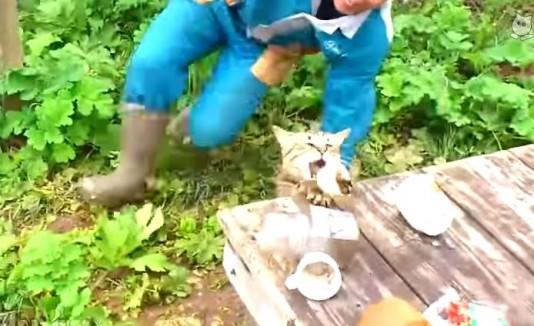Gato robando un pez