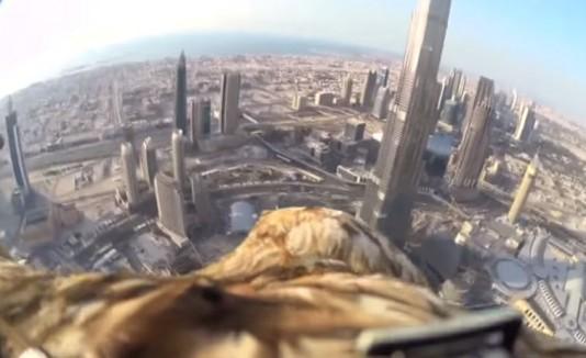 Águila volando por Dubai.
