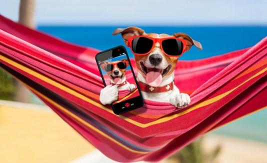 Selfie de un perro con gafas en una hamaca