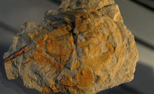 Piedra que sería un juguete de hace dos millones de años