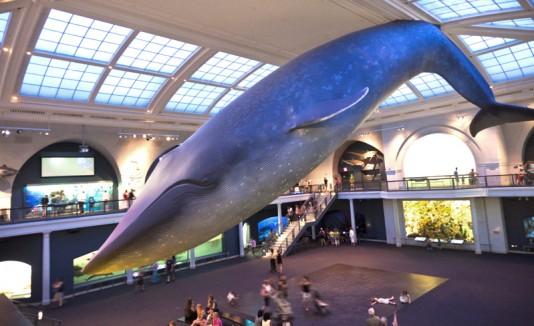 Museo de Historia Natural en Nueva York