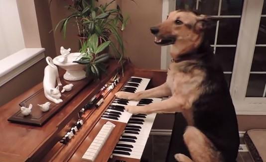 Perra tocando piano
