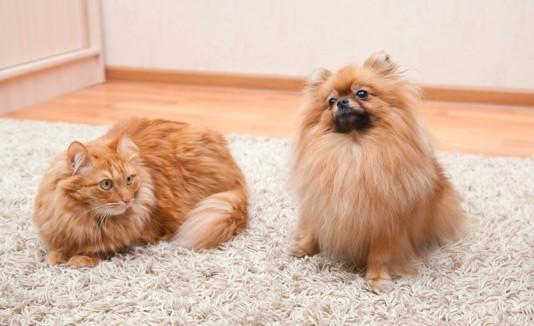 Gato y perro en una casa