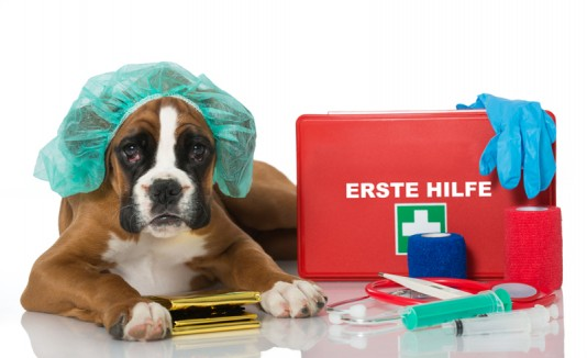Perro con kit de primero auxilios