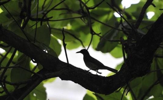 Puerto Rico tiene 17 aves endémicas, muchas de las cuales pueden observarse en el bosque de Arecibo.