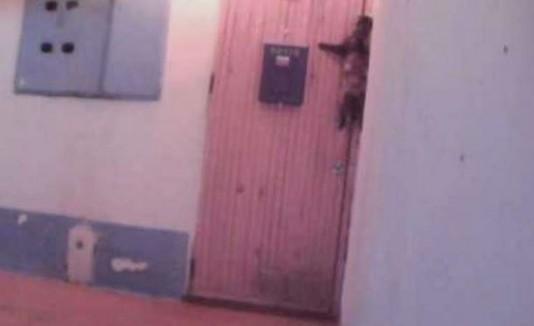Gato toca timbre de su hogar para entrar
