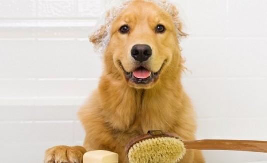 Perro en la ducha