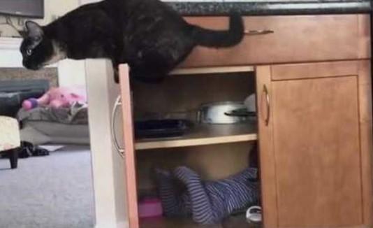 Gato que encierra a bebé