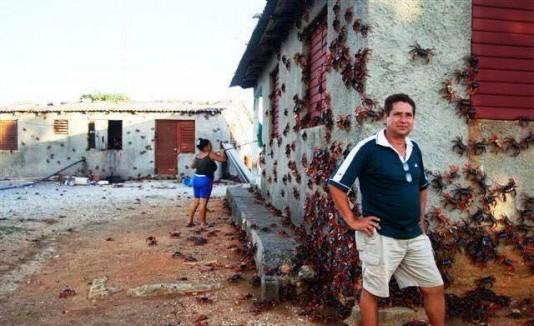 Cangrejos invaden Cuba
