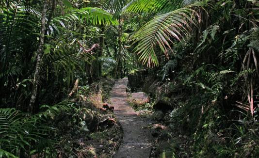 Vereda en El Yunque.