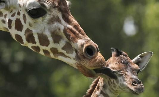Beso de mamá