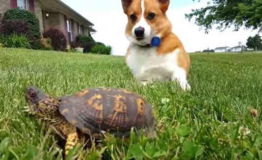 Perro se asusta con una tortuga
