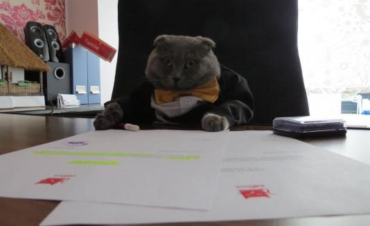 Boos, el gato gerente de Catbox