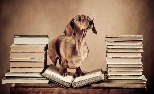 Perro con libros