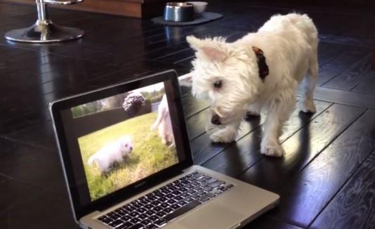 Animales reaccionan a la tecnología