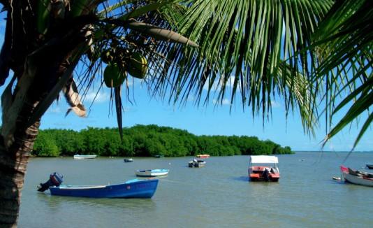 Ceiba / Playa Los Machos