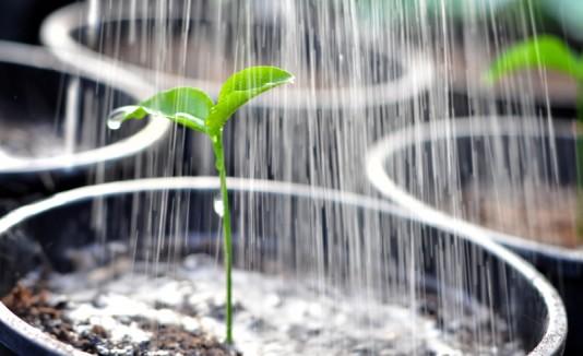 Planta cogiendo agua.