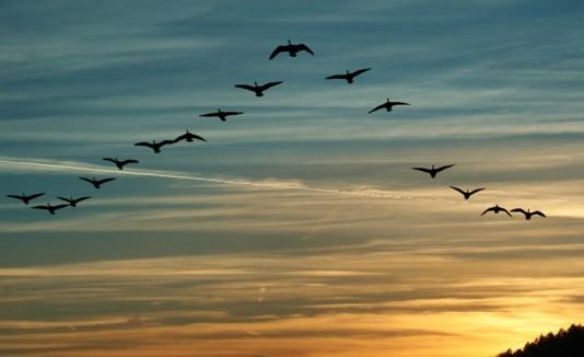 Aves volando en el cielo.