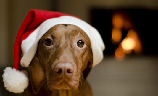 El ruido es uno de los factores que más estresan a los perros.