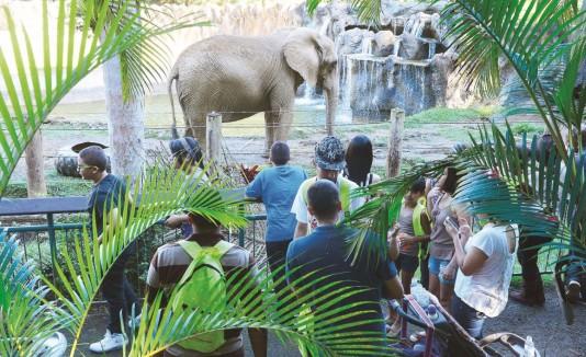 Zoologico Mayaguez