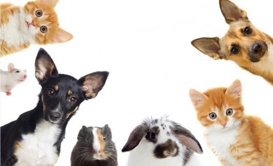 Mascotas, animales