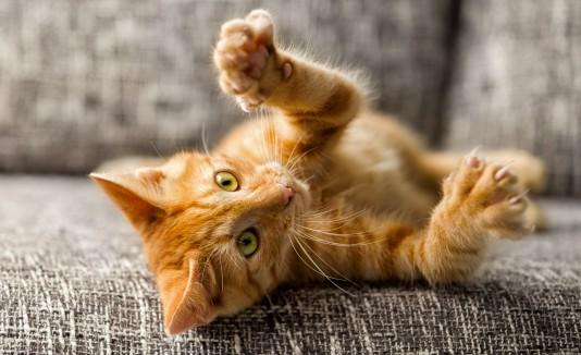 La edad de los gatos, suele ser más complicada que la de los perros.