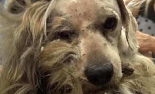Hope For Paws presenta el caso de un perrito aterrado