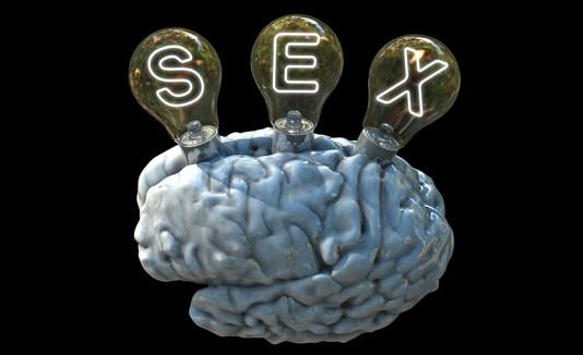 Sexo, Cerebro