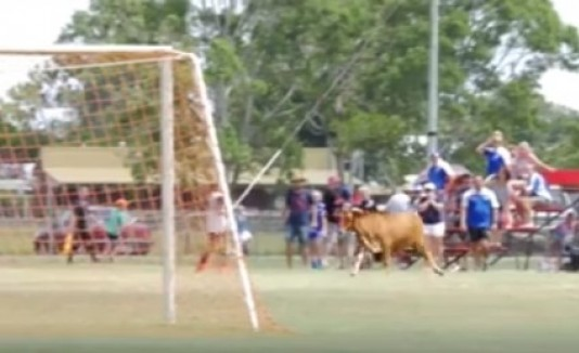 Toro entra a campo de fútbol
