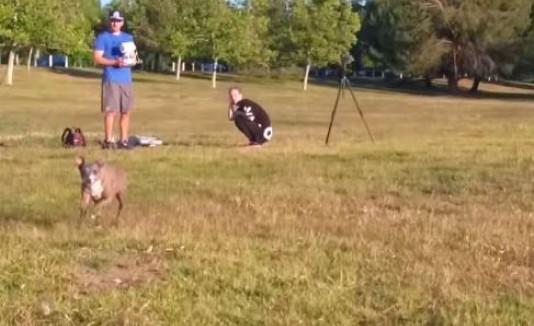 VÍDEO: Perro juega a capturar un drone