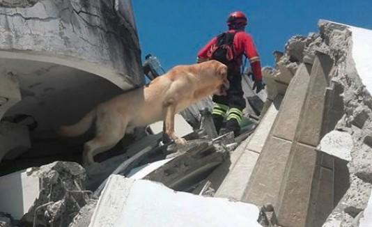 Muere perro tras salvar a 7 personas en Ecuador