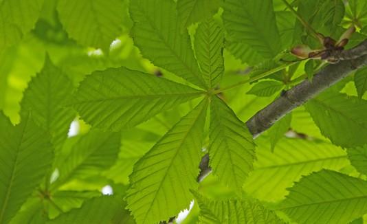 Hojas, Plantas, Árboles, Naturaleza