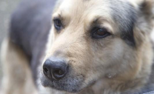 Crean el primer mapa de excremento de perros en Madrid