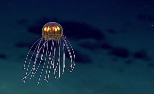 VÍDEO: Captan una deslumbrante medusa