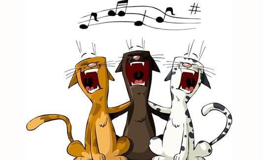 Gatos, música