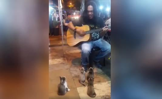 VÍDEO: Artista callejero tiene cuatro gatitos como fans