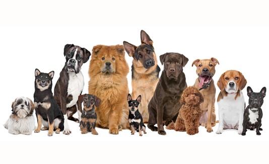 Perros, Razas, Mascotas