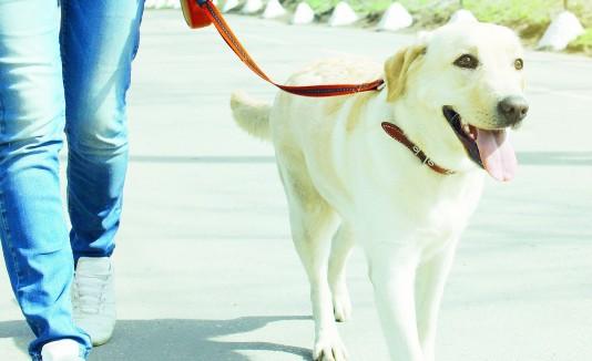 Al igual que para nosotros, los perros necesitan una dieta balanceada y llevar a cabo ejercicios como correr o caminar.