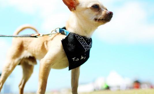 """Se espera que el """"Pet Park"""" esté listo para finales de este año."""