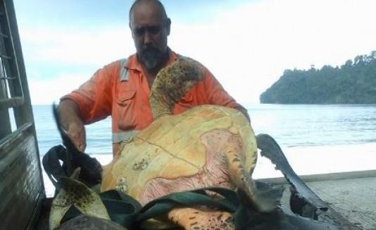 Salva Tortugas