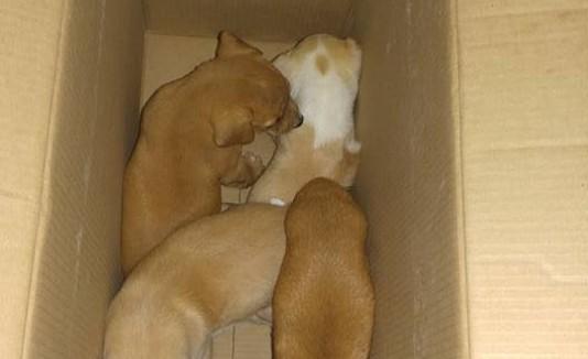 Perros abandonados en Cataño