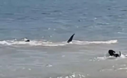 Perro entró al mar y nada con tiburones