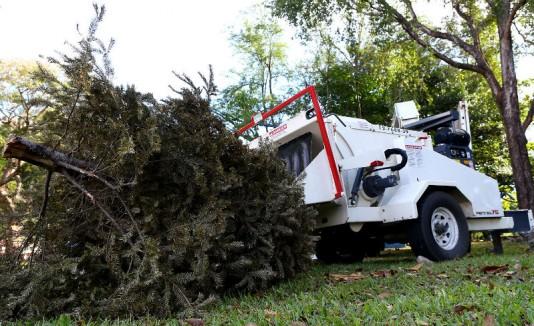 Reciclaje árboles de navidad