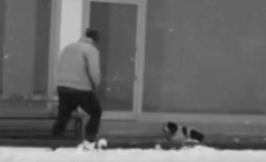 Premian a hombre que ayudó a un perro en Turquía