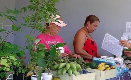 Feria Agrícola en Luquillo