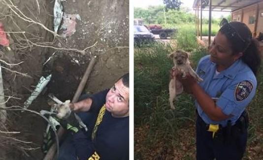 Rescatan cachorro atrapado en una tubería, en Coamo