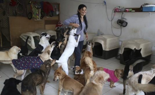 Mujer crea hogar para 70 perros abandonados en Perú